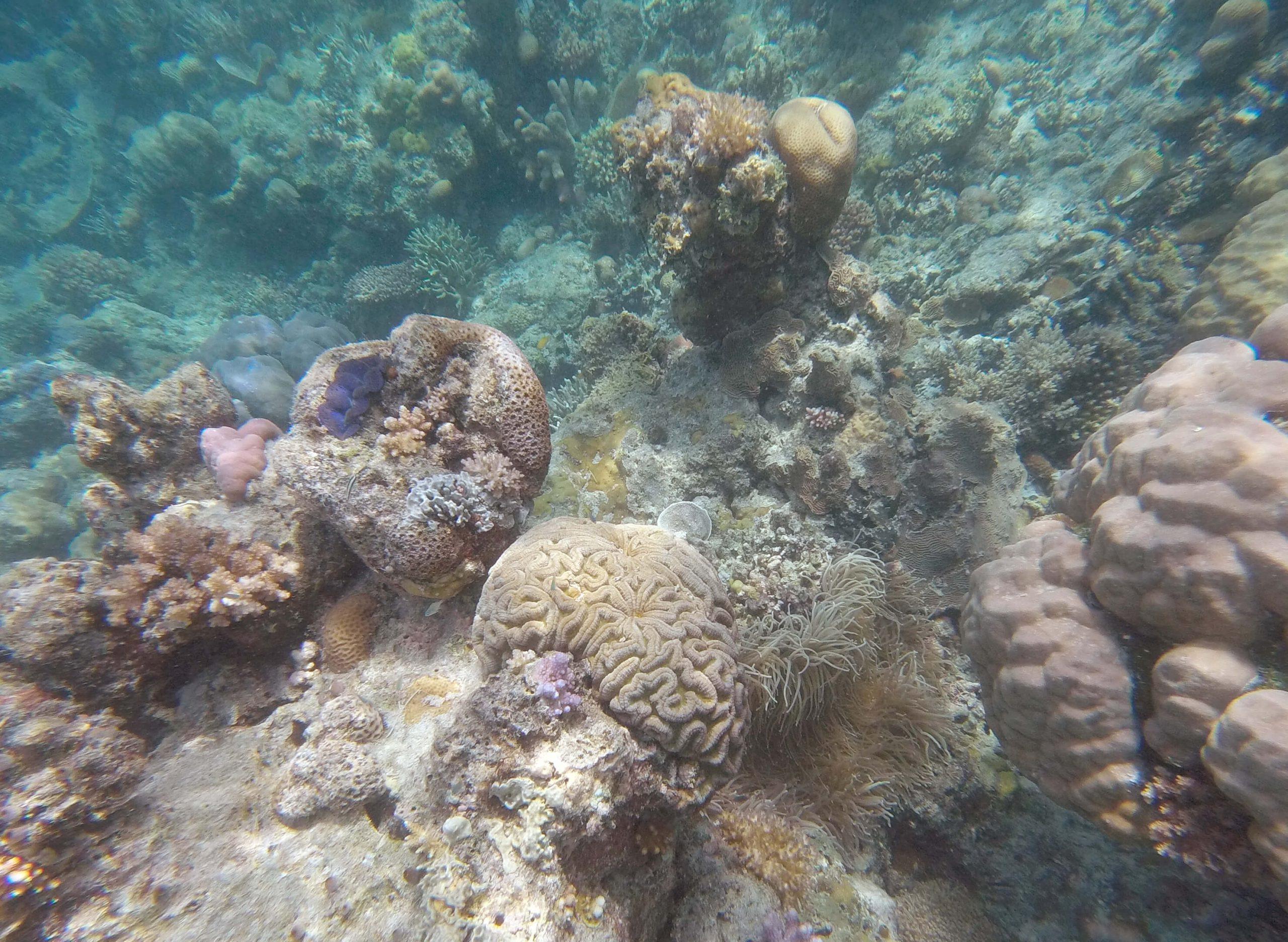 Hermit Island corals