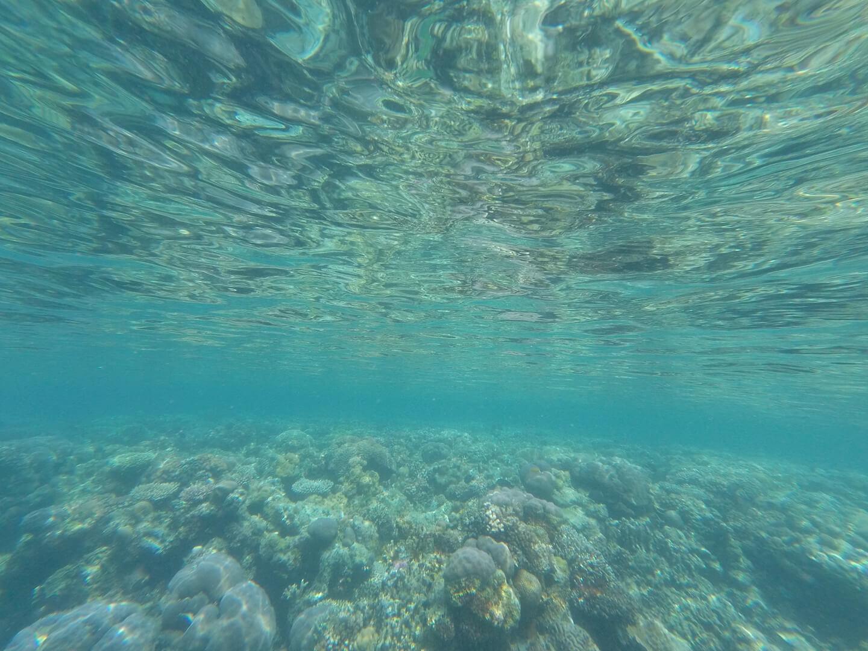 Hermit Island underwater