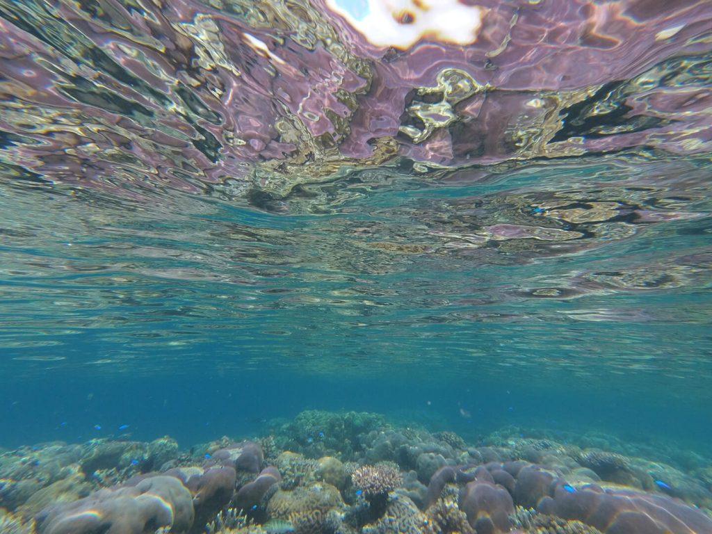 Aurelie Hermit koraller