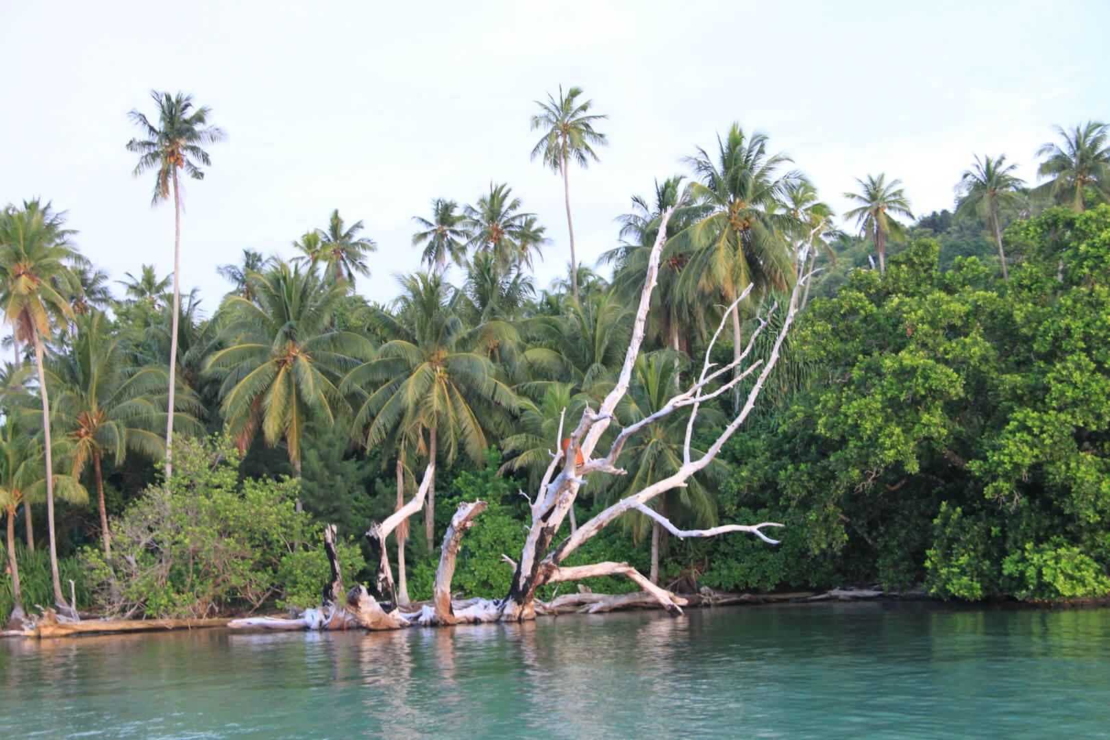 Musicomexp Hermit Island